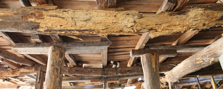 Wood roof girders with woodworm